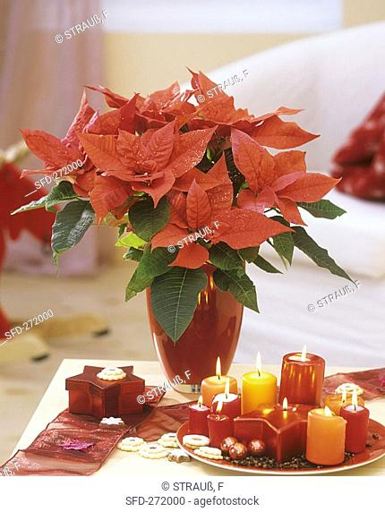 Poinsettia with glitter, candles and star-shaped box