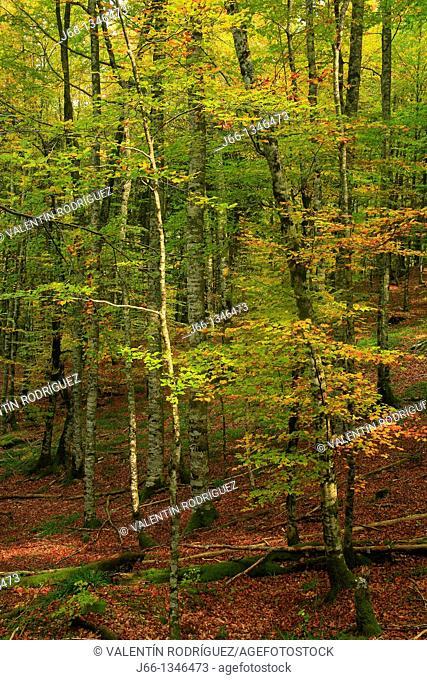 Forest Nature Park Irati. Navarra