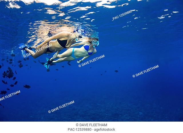 Two young women free diving with black triggerfish (Melichthys niger), Molokini Marine Preserve off the island of Maui; Maui, Hawaii, United States of America
