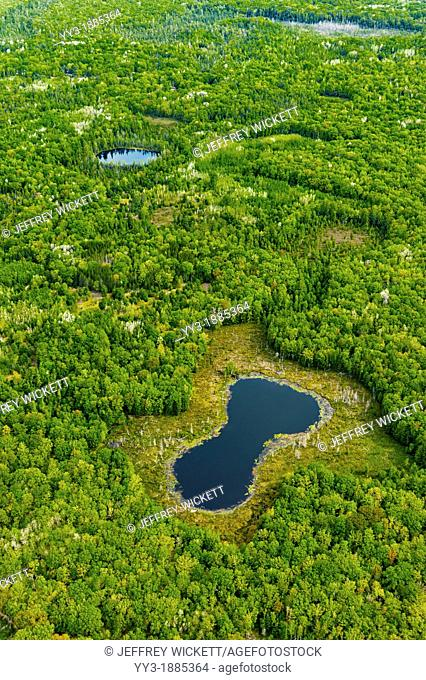 Aerial view of bog in wetland area on the Huron-Manistee National Forest in Michigan, USA