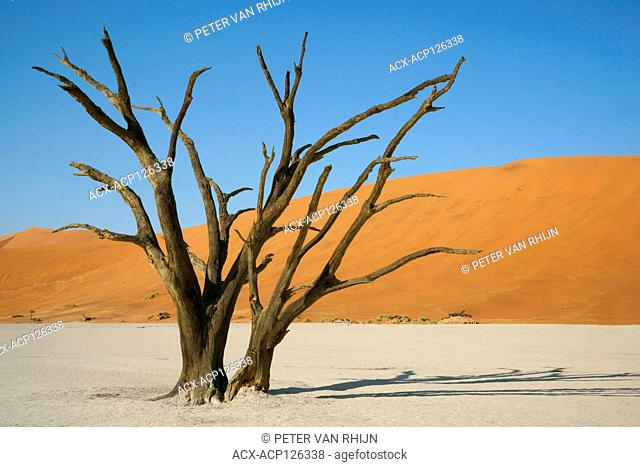 Dead Vlei inside the Sossusvlei,with skeletons of ancient dead Acacia trees. The 'Vlei' is a clay pan where a long time ago a creek was encircled by dunes and...