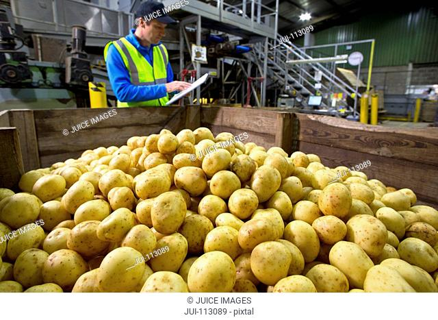 Worker with clipboard at bin of fresh harvested potatoes