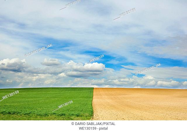 Center symmetry of two different fields with clouds behind