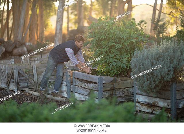 Farmer examining a plant in the farm