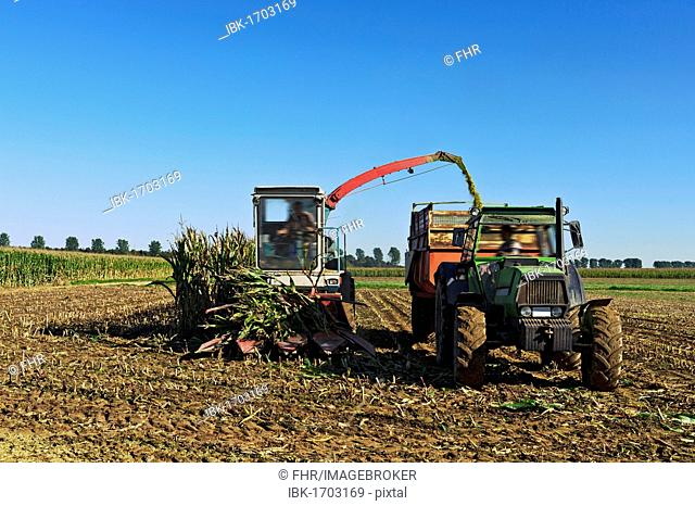 Corn harvest in autumn, Grevenbroich, North Rhine-Westphalia, Germany, Europe