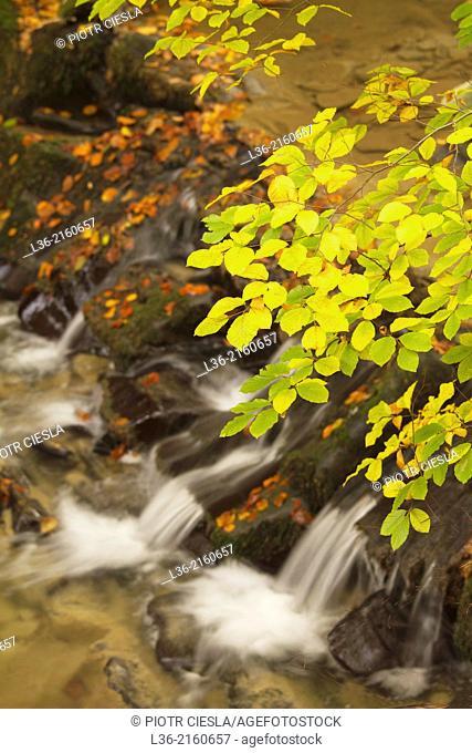 Waterfalls at Hulski stream. Bieszczady Mountains. Poland. Autumn