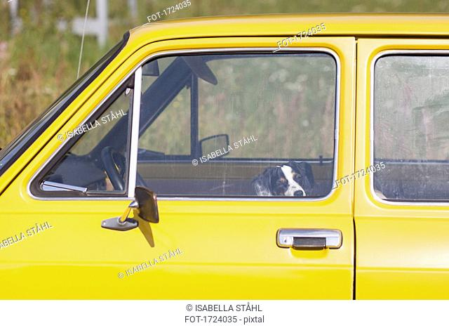 Dog sitting in yellow car on sunny day