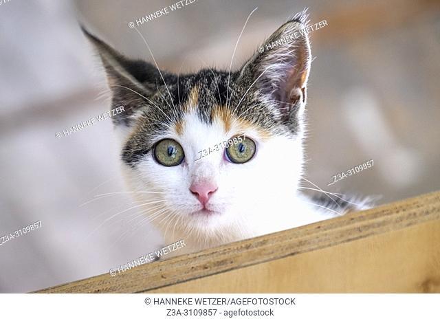 Portrait of a cute kitten high uo on a wooden object