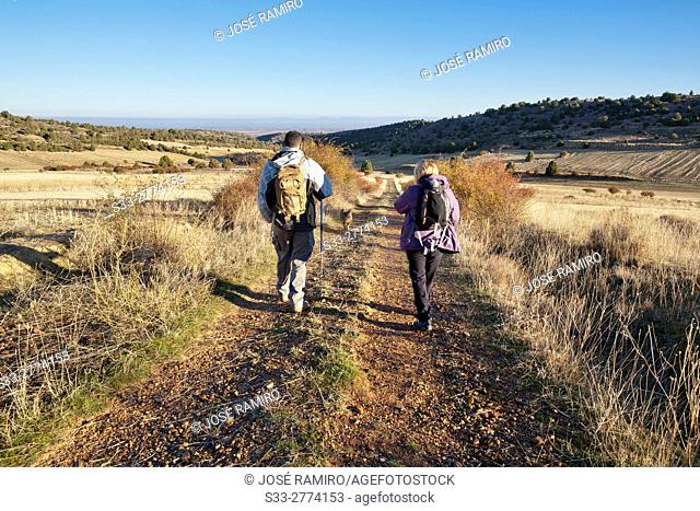 Pililla road in Valdevacas de Montejo. Segovia. Castilla Leon. Spain. Europe