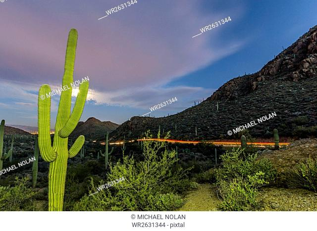 Giant saguaro cactus (Carnegiea gigantea) under full moon at Gates Pass in the Tucson Mountains, Tucson, Arizona, United States of America, North America