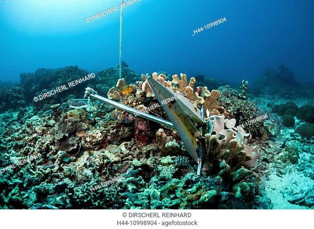 Anchor in Coral Reef, Indo Pacific, Indonesia
