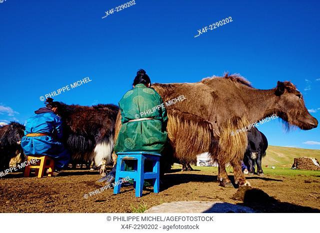 Mongolia, Bayankhongor province, nomad camp, time to milk the yak