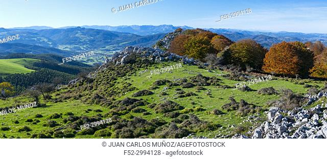 Beech forest in autumn at Cerredo Mountain, Cantabrian Sea, MONTAÑA ORIENTAL COSTERA MOC, Castro Urdiales, Cantabria, Spain, Europe