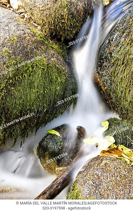 Solana Toro stream between granite and moss on a fall day. Iruelas Valley. Avila. Spain