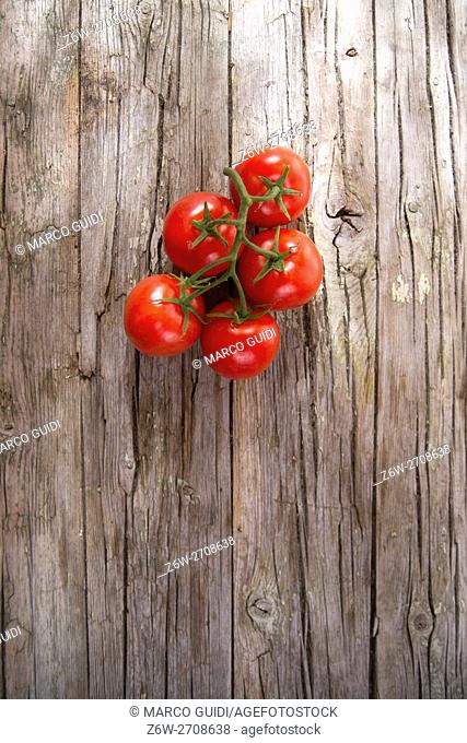 Presentation of a cluster of smooth round red tomatoes