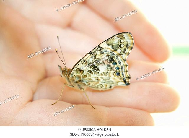 Picture of butterfly on girl's (8-9) hand