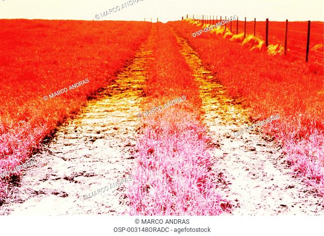 pink farm ground fields color effect