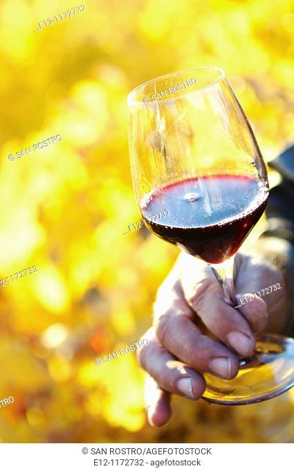 France, Vaucluse, Cairanne, winegrower Marcel Richaud, wine tasting in vineyards of his 'côte du rhone village'