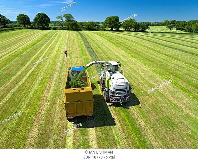 Aerial view of forage harvester cutting grass silage crop in field and filling tractor trailer while farmer watches