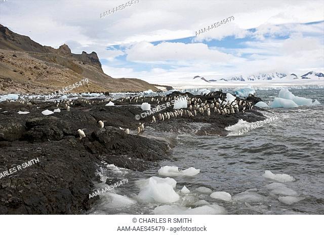 Adelie penguins at Brown Bluff, Antarctica 20090110 (Pygoscelis adeliae)