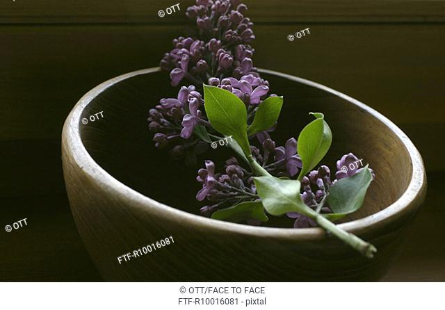 A bunch of lilac placed at the edge of a wooden container