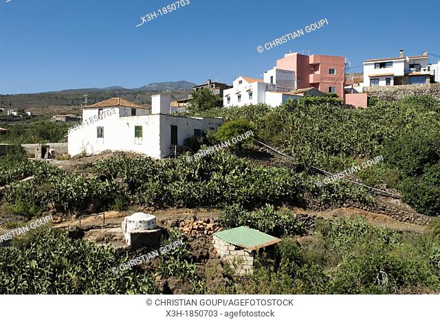 prickly pear and traditional Canarian house, South-West coast, Tenerife, Canary Islands, Atlantic Ocean