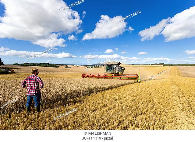 Rear View Of Farmer Standing In Wheat Field At Harvest