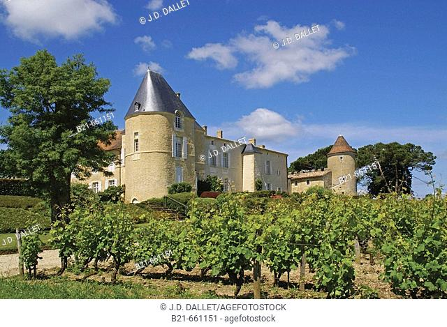 France, Gironde. 'Château d'Yquem',  place where world most famous white wine, and perhaps most expensive, is done, in the Sauternes area