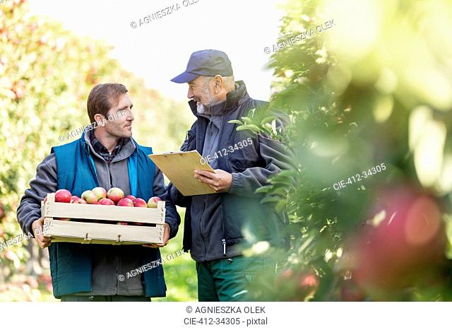 Male farmers with bushel of apples and clipboard talking in orchard