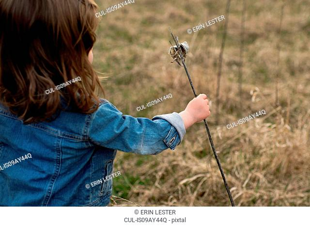 Young girl picking a weed in meadow, rear view