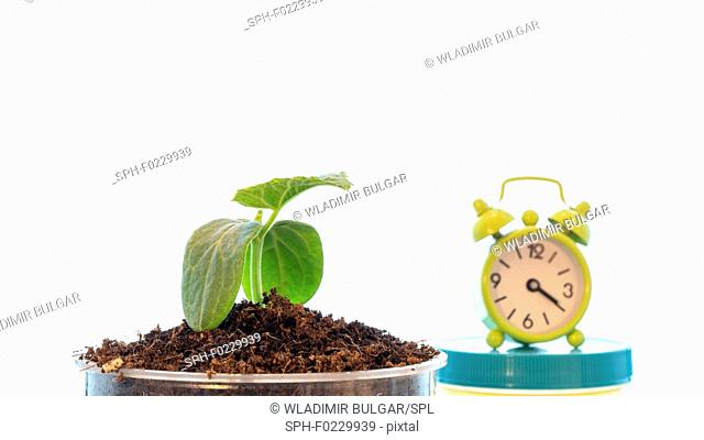 Plant and alarm clock