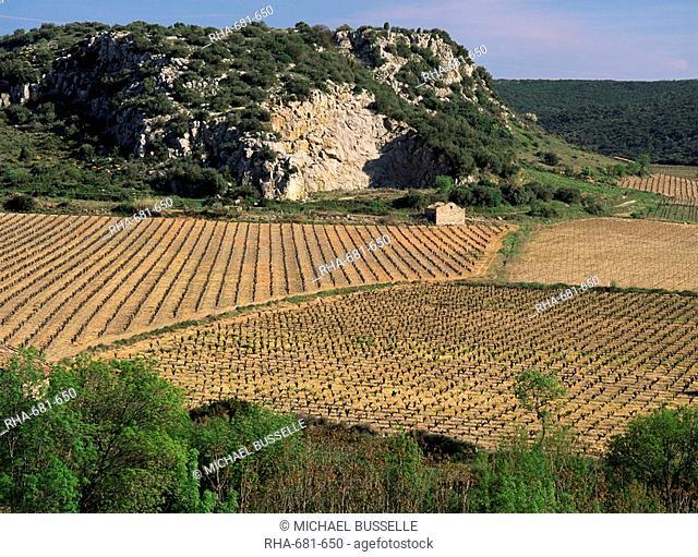 Vineyards near Pezenas, Herault, Languedoc-Roussillon, France, Europe