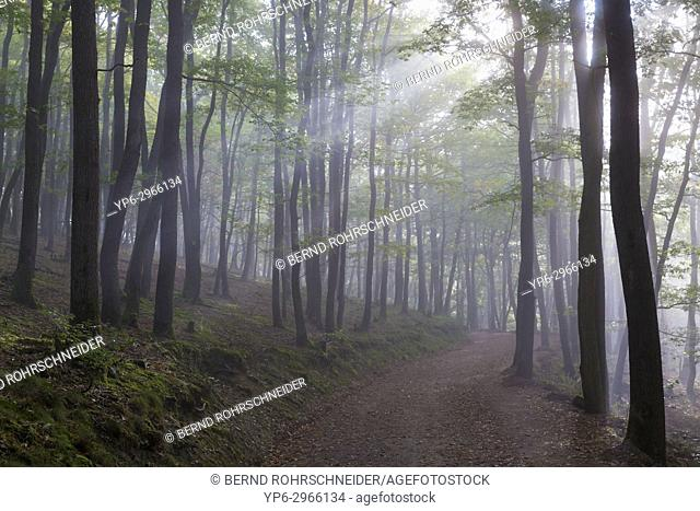 forest track with fog and sunbeams, Mattheiser forest, Trier, Rhineland-Palatinate, Germany