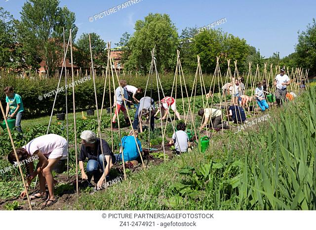 Children working in their school garden to learn how to grow vegetables