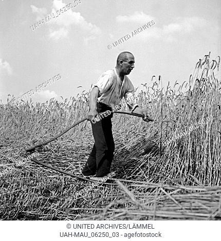 Bauer bei der Getreideernte, Deutschland 1930er Jahre. Farmer harvesting grain, Germany 1930s