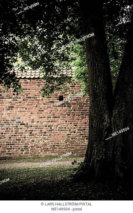 Red brick wall and old tree in empty park. Tranquil and calm architecture background