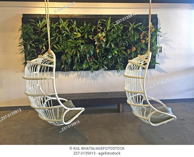 Two wicker seats swing from the ceiling of a trendy cafe against the backdrop of a wall panel with live plants, Maui, Hawaii, USA