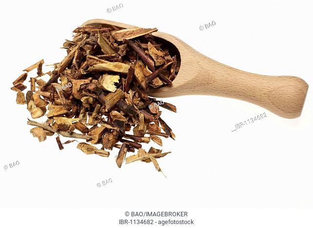Medicinal plant Herbaceous Perennial (Eupatorium fortunei), Pein Lan, dried herbs