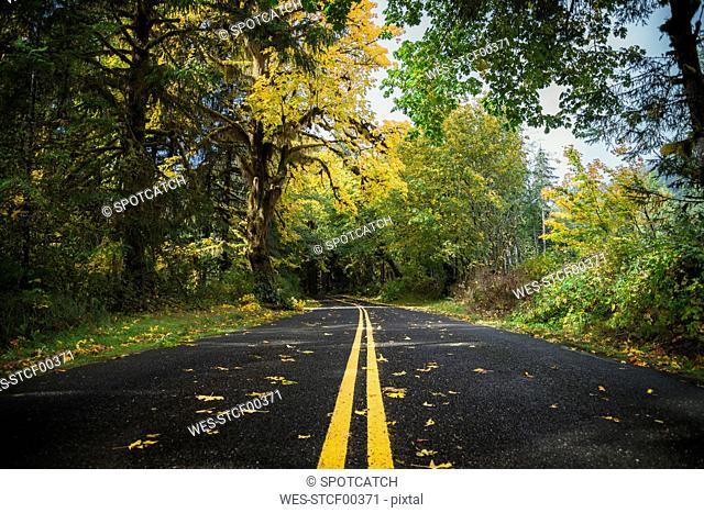 USA, Washington State, Hoh Rain Forest, Road in autumn
