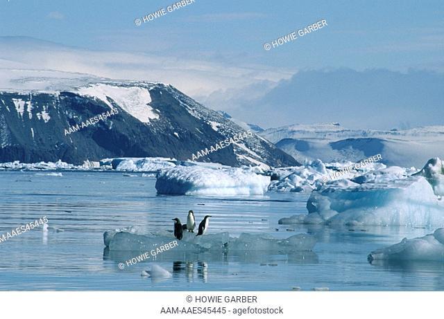 Adelie Penguins (Pygoscelis adeliae) on an iceberg , Antarctic Peninsula