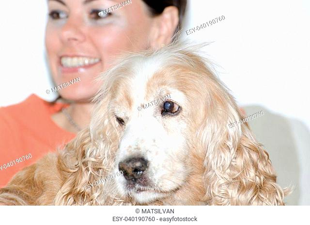 Woman with a cocker spaniel dog
