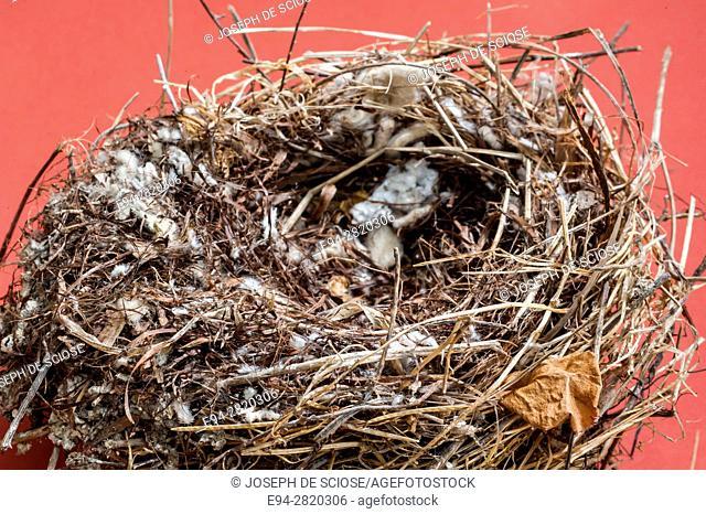 Close up of a bird's nest