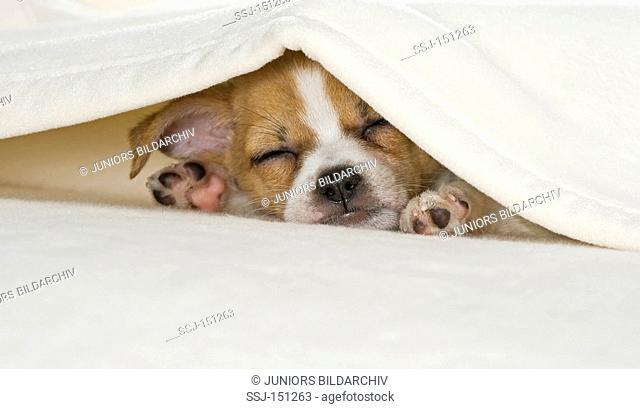 half breed dog puppy - sleeping restrictions: animal guidebooks, calendars