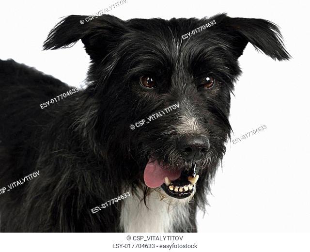 Black mixed breed portrait