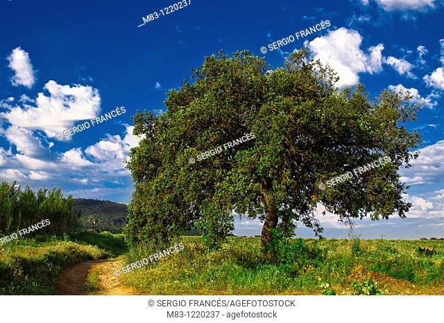 Countryside in La Zafra, Comunidad Valenciana