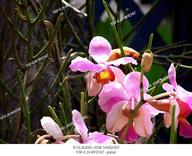 Flowers, orchid, orchids, Botanical Garden, City, Rio de Janeiro, Brazil