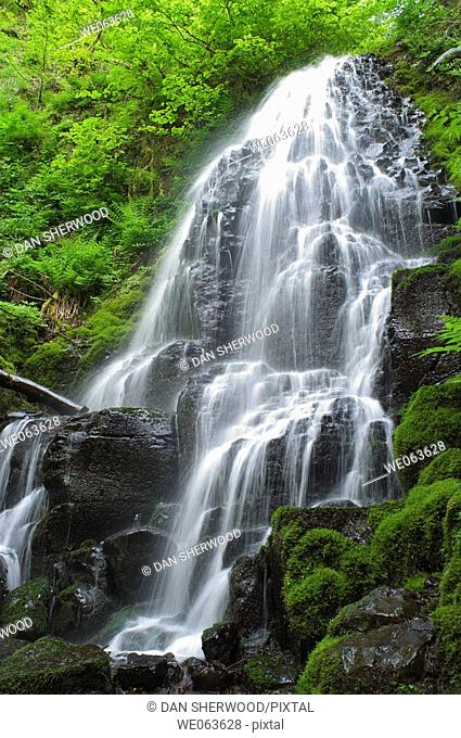 Fairy Falls in Spring - Columbia River Gorge, Oregon, USA