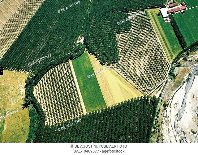 Poplar groves, aerial view, near Saluzzo, Piedmont, Italy