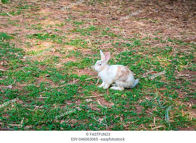 Wild rabbit on the grass nature background