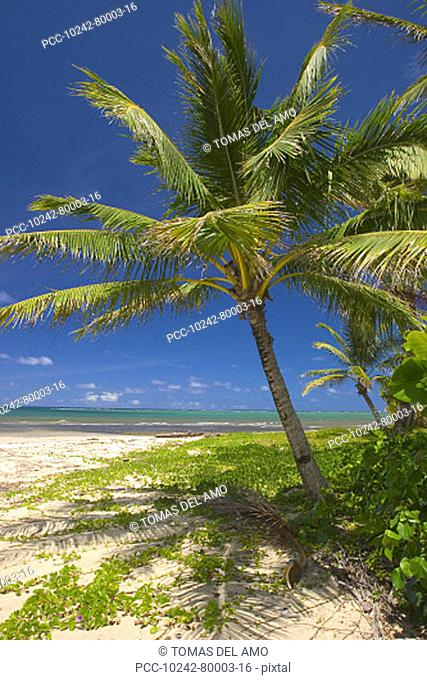 Hawaii, Oahu, Lanikai Beach, scenic landscape with palm tree's